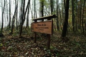 Forest educational trail Fuks graba